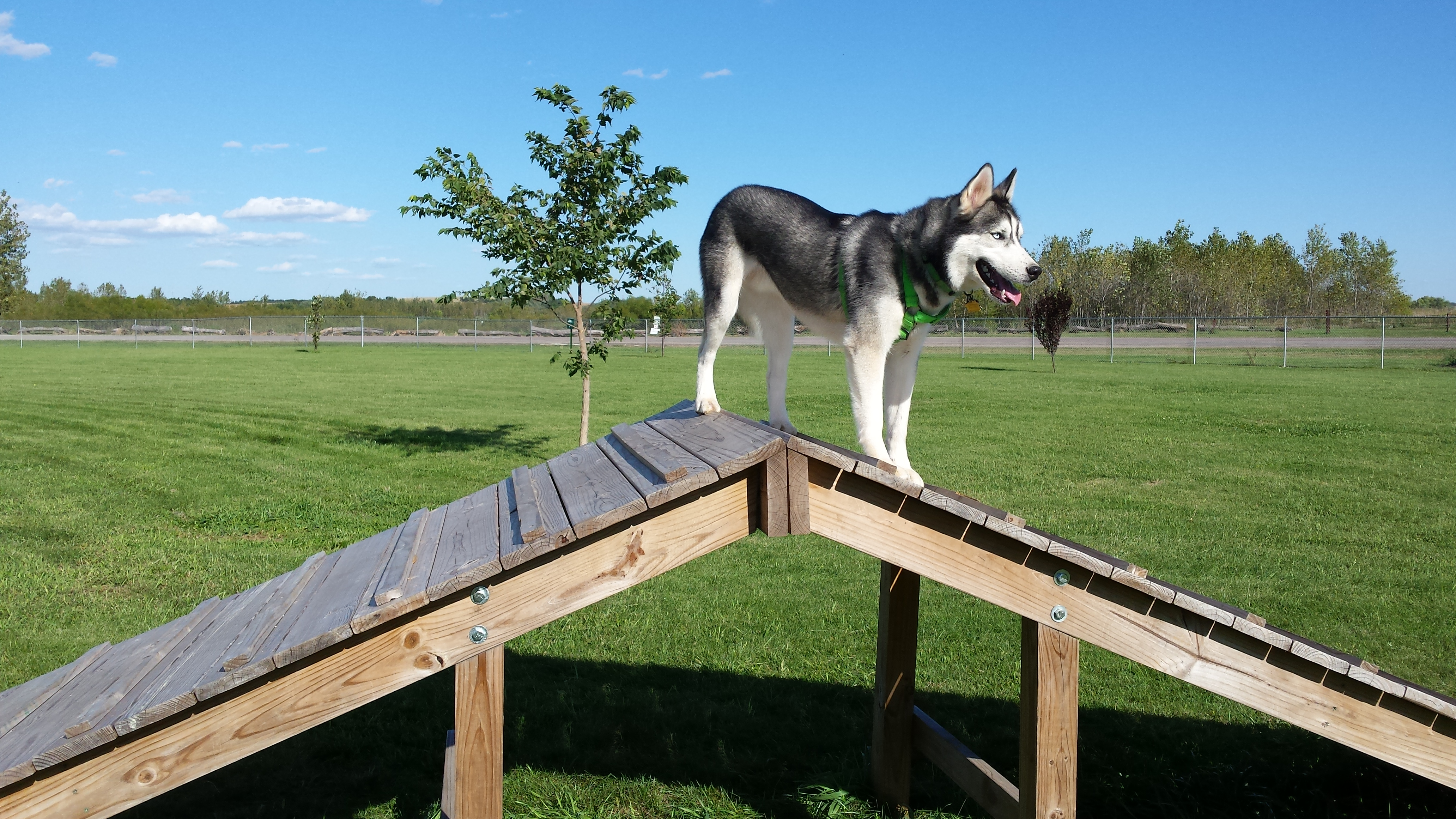 dog park how to build it